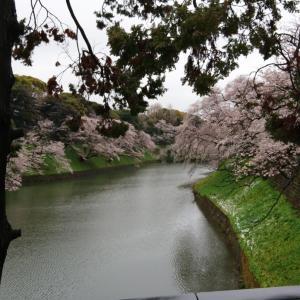 遠目から桜見物