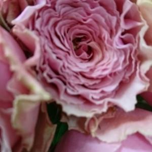 お家に咲いている花を