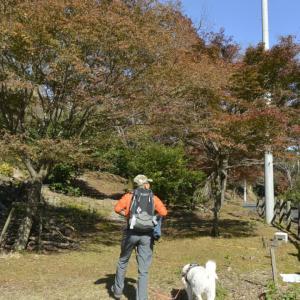 池田山ハイキング 犬と散歩