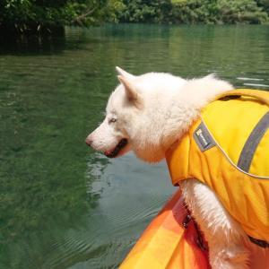宮川で犬とカヌーと行きにくいうなぎ屋さん