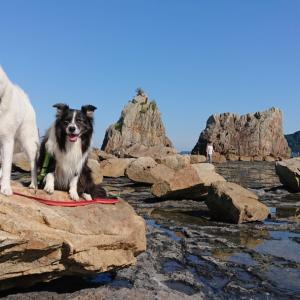北海道犬とボーダーコリー 岩の上に乗せてみた