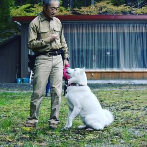 日本犬のしつけ山下國廣先生の講習