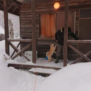 北海道犬と一色の森キャンプ場 バンガロー泊