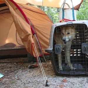 7月平湯キャンプ場 犬とキャンプ
