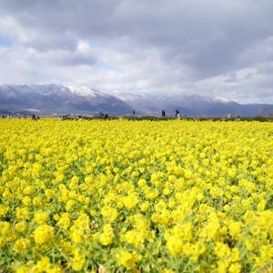 菜の花と雪山&ストロベリーファクトリー