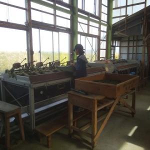 子供達、茶工場にて。