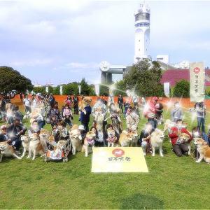 日本犬祭り2018