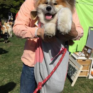 日本犬祭り