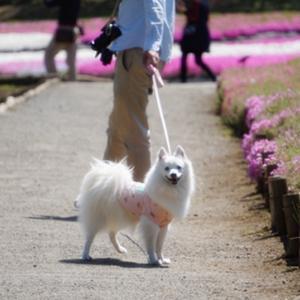 お山でお散歩☆羊山公園