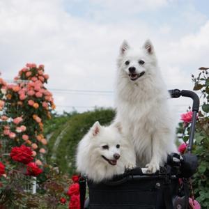 お友達と薔薇園へ♪