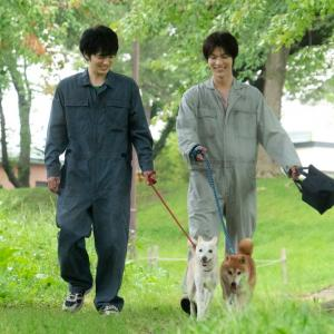林遣都・中川大志の場面写真解禁 あふれる動物愛映画『犬部!』
