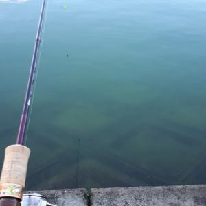 今シーズン最後の東山湖!【2020年6月20日】東山湖