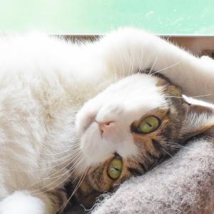 猫アスリート