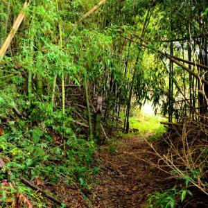 西俣野の山裾を歩く(その2)