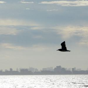 日乗俳句 その六百三十六 白い海