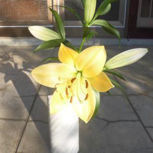 百合「テラソル」が咲く