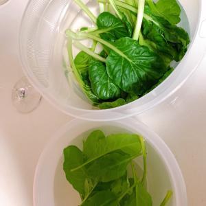野菜 と ドレッシング