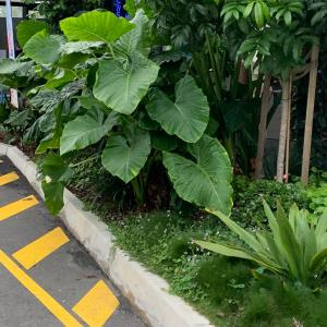 お家の植物