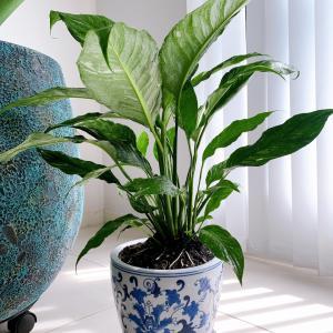 観葉植物 増えました♪