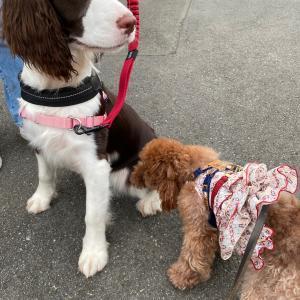 クックとティーちゃんの4連休 新横浜公園ドッグランの巻き