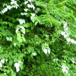 箱根路の未だ開かぬ茶屋 半夏雨
