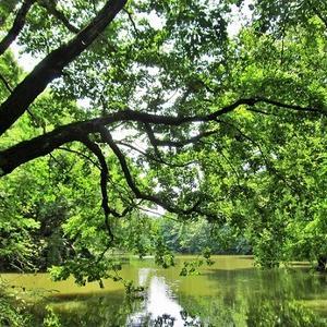 緑陰の深き底なる震生湖