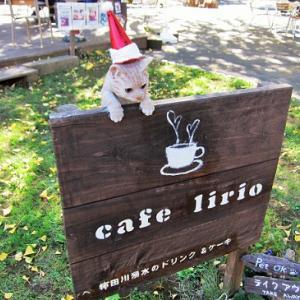 まねき猫も赤い帽子のクリスマス