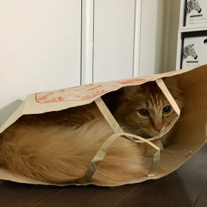 【猫】紙袋だいすき!