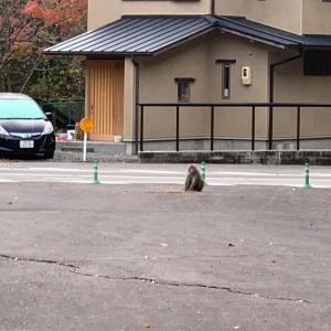 キャンピングカーアルコーバで行く日本最古の共同風呂 秘湯つぼ湯2