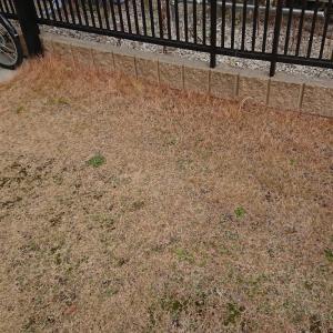 庭の芝生は注意してね・・・!!