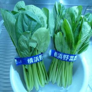 野菜高騰中!