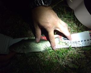 夜釣りで初バスin柳が崎