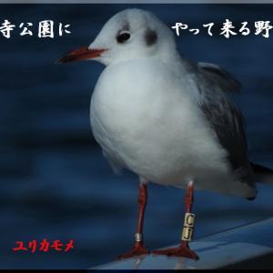 新春の野鳥