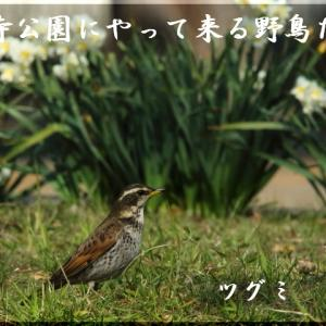 3月の野鳥
