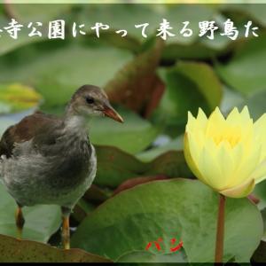 7月の野鳥