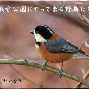 12月の野鳥