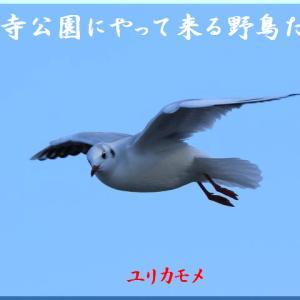 2月の野鳥