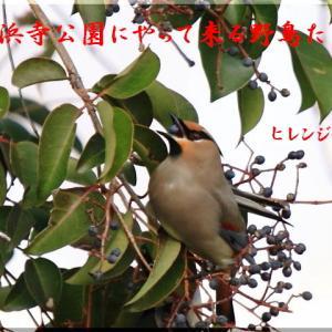 1月の野鳥