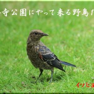 今月の野鳥