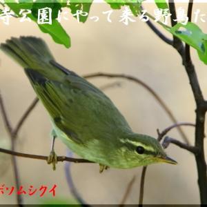 8月の野鳥