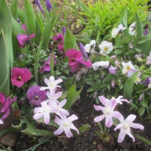 咲いた花に白い雪