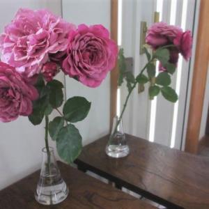 クランベリーソースのバラ