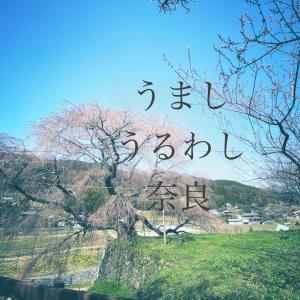セレッソ無いと暇やから奈良に行ってきた