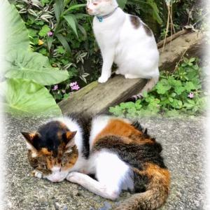 台湾の猫情報 猫村から野良猫迄