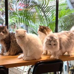 ペットカフェ 小春日和でワンチャン猫ちゃんと遊べる