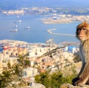 ... hasta que hable inglés (¡Leña al mono...!) 猿、英語 / Sevilla, la ciudad que enamora. Sevilla /