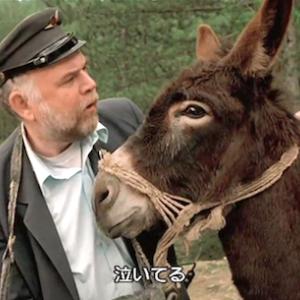Tiene mal de amor ロバの失恋自殺 burro (La vida es un milagro) / John Huston nació (1906) México 放浪 / 今週末の闘牛予定 tauroguía
