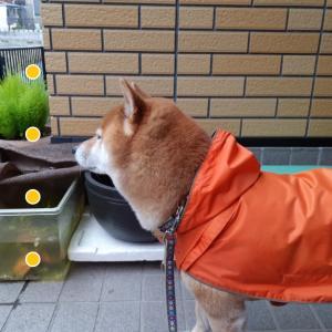 雨の日は自宅待機希望