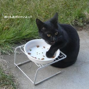状況はくるくるまわり今日は猫遊日和♪