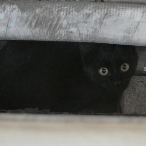 気が弱くてビビリイな黒猫ちゃんが教えてくれること♪